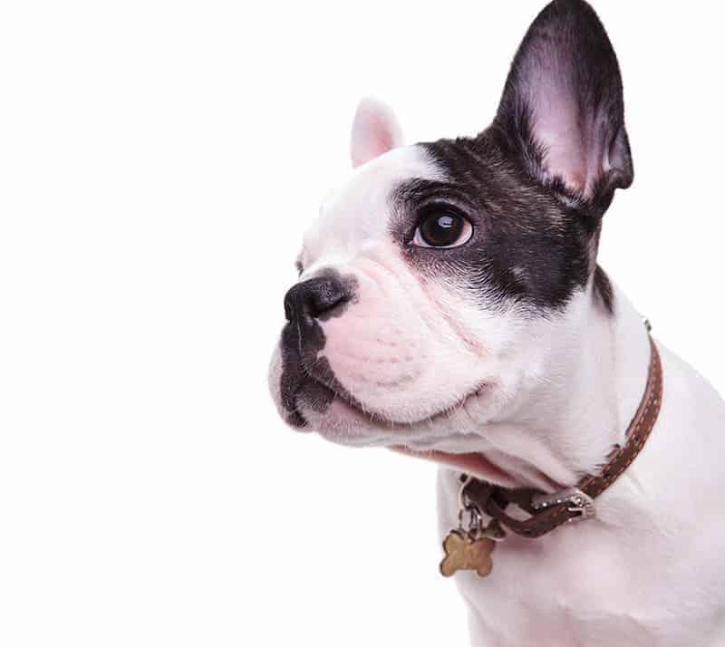 Co robić w sytuacji straty psa?