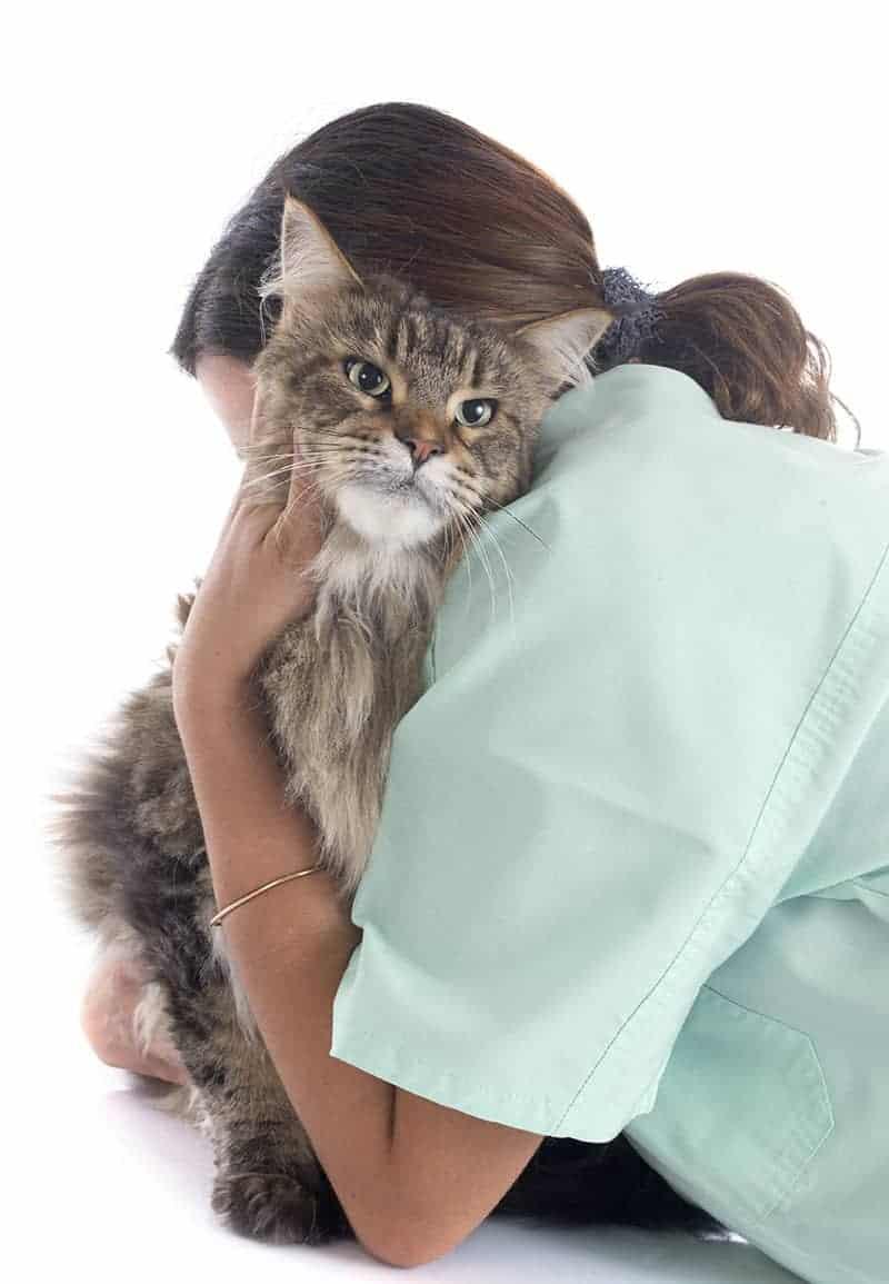 Czy lekarz weterynarii może odmówić uśpienia zwierzęcia?