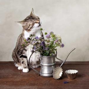 Kichanie kota