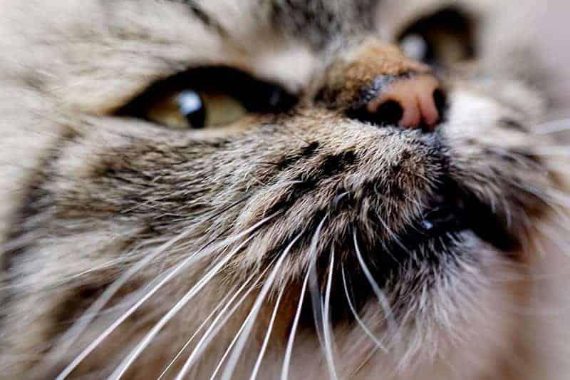Dlaczego kot kicha?