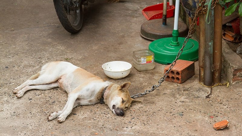 Co robić, gdy zobaczysz psa na uwięzi?