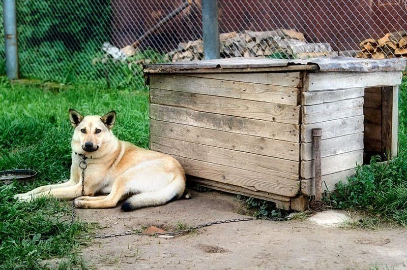 Dlaczego psy na łańcuchu gryzą i szczekają?