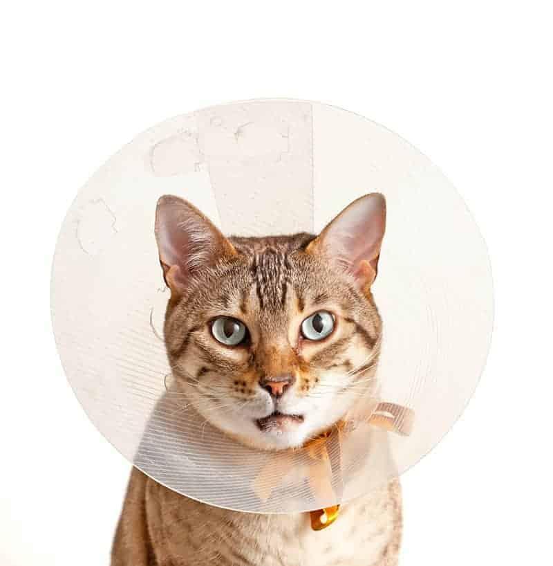 Kołnierz dla kota