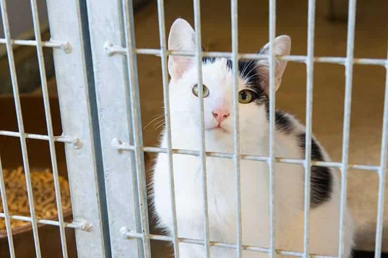 Wyprawka dla adoptowanego kota