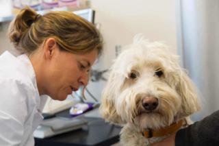 Choroby neurologiczne u psa