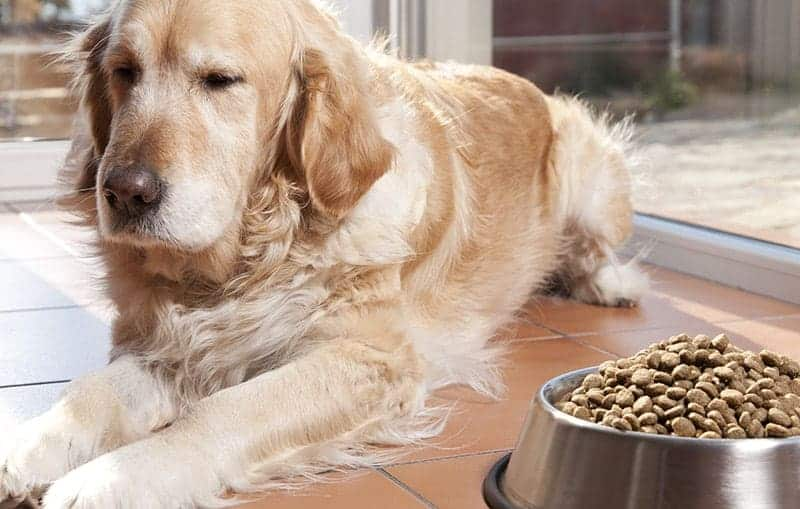 Przyczyny mocznicy u psa