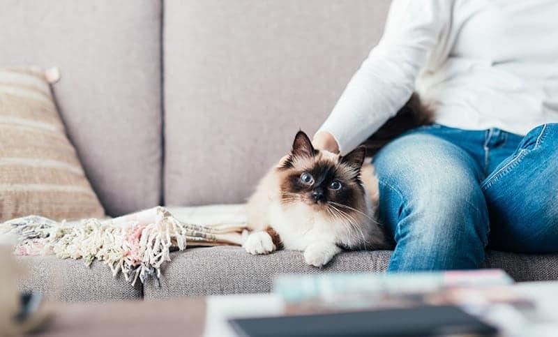 Dlaczego koty mruczą?