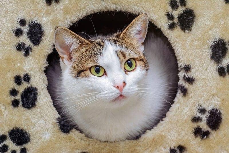 Budki dla kotów