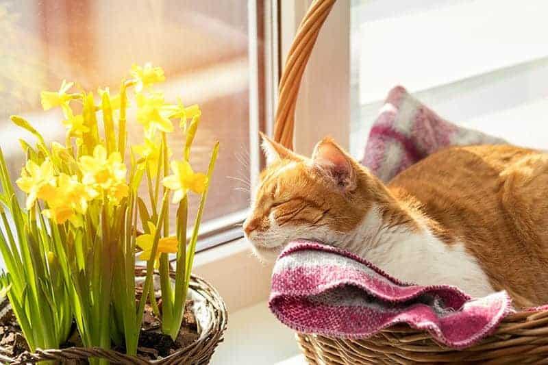 Wiklinowe koszyki dla kota