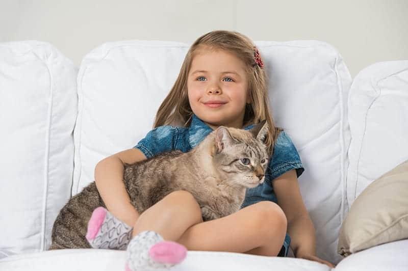 Dlaczego koty mruczą, gdy są głaskane?
