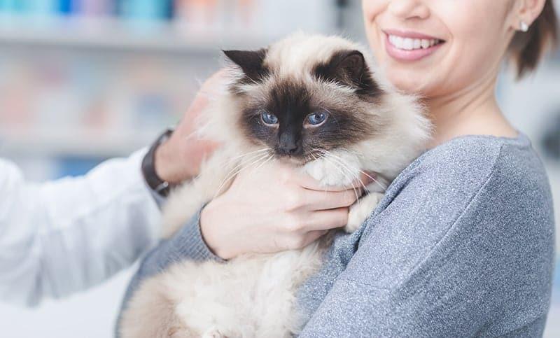 Jak mruczenie kota wpływa na człowieka?