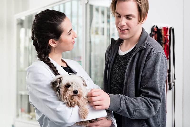 Jak przygotować psa/kota na pobyt w szpitalu?