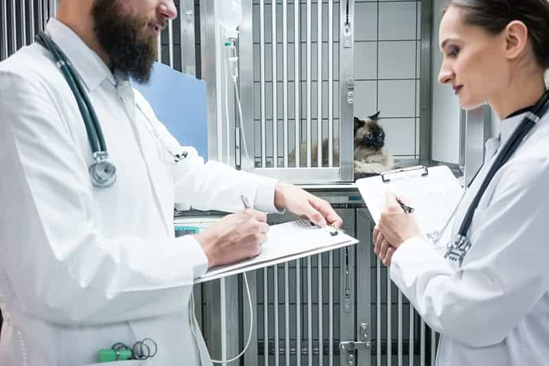 Szpital dla psa i kota