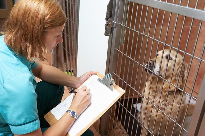 Czego mogę się spodziewać, gdy zwierzę jest hospitalizowane?