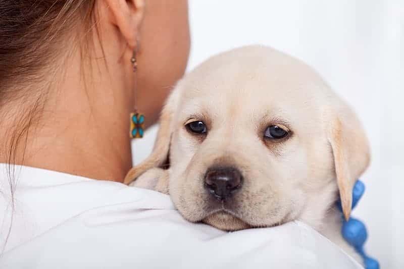 Przyczyny chorób ortopedycznych u młodych psów