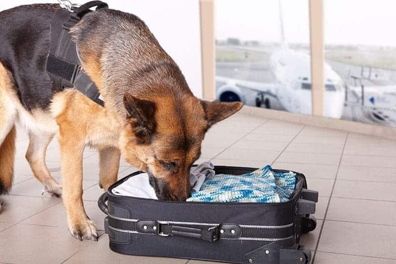 Psi nos w służbie człowieka