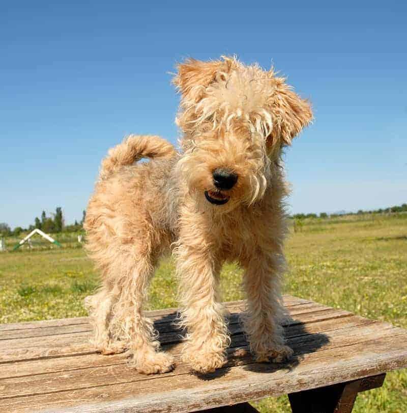 Pielęgnacja i żywienie psa