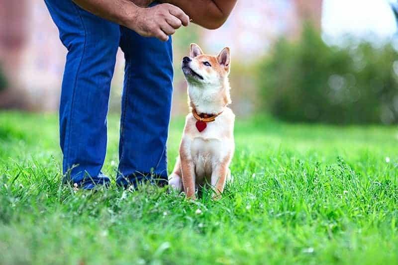 Sport dla psa: obedience