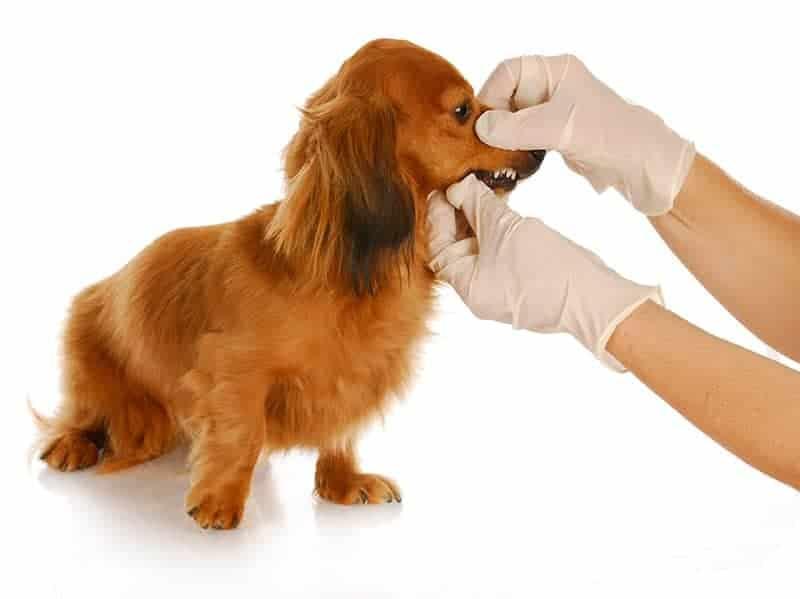 Jak rozpoznać chorobę u psa?