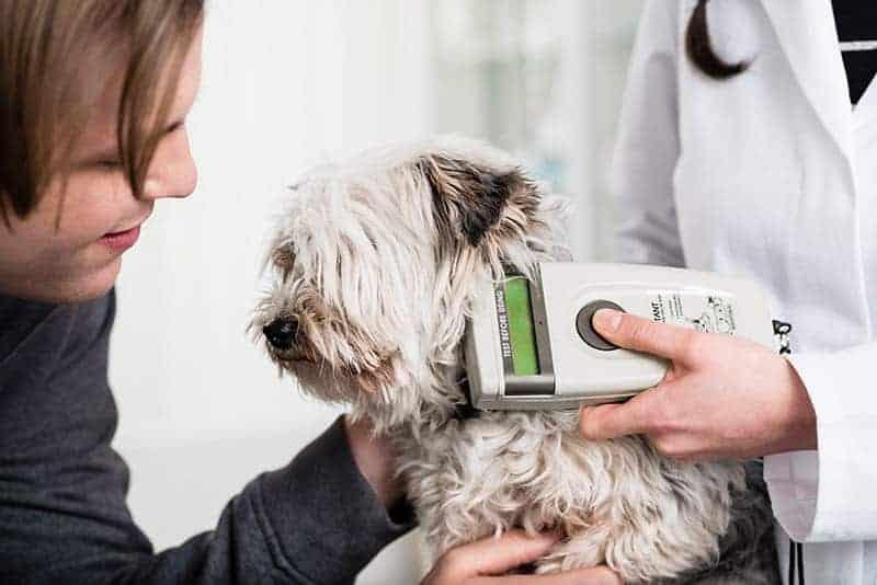 Rejestracja psa w bazie danych