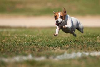 Sport dla psa
