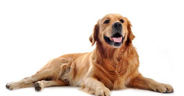 Co właściciel psa powinien wiedzieć o zerwaniu więzadła