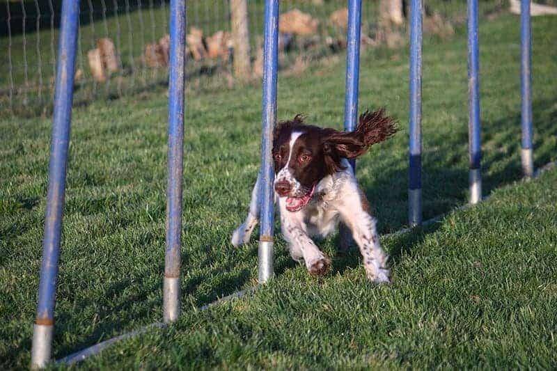 Psie aktywności i sporty