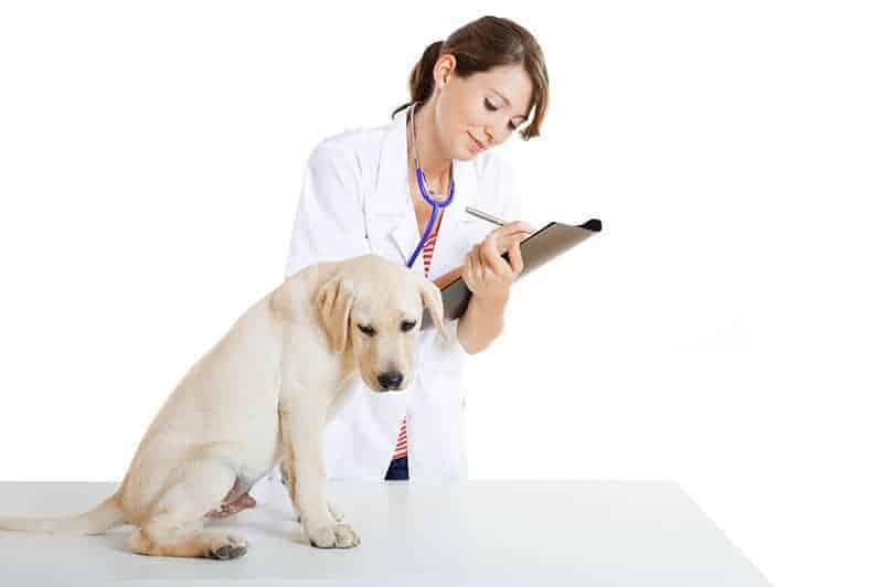 Badanie psa przed wyjazdem