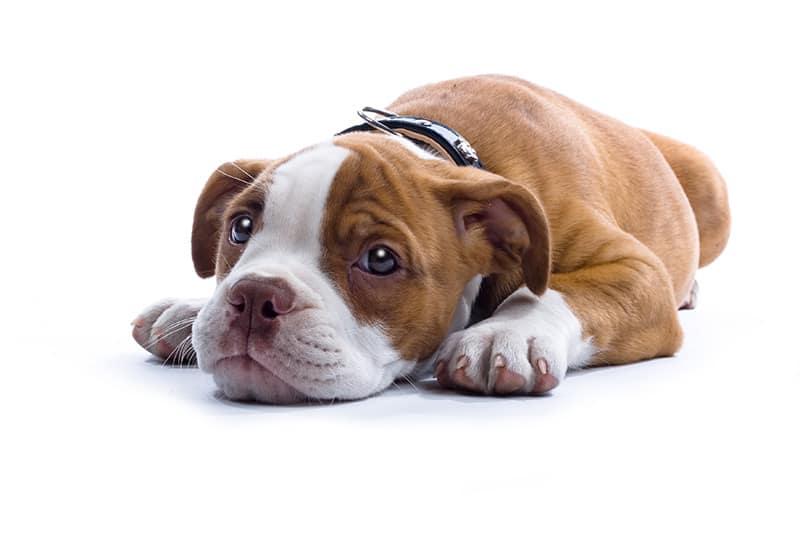 Problem z koncentracją u psa