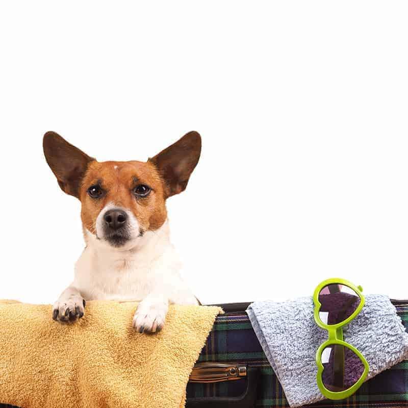 Hotel przyjazny dla psa