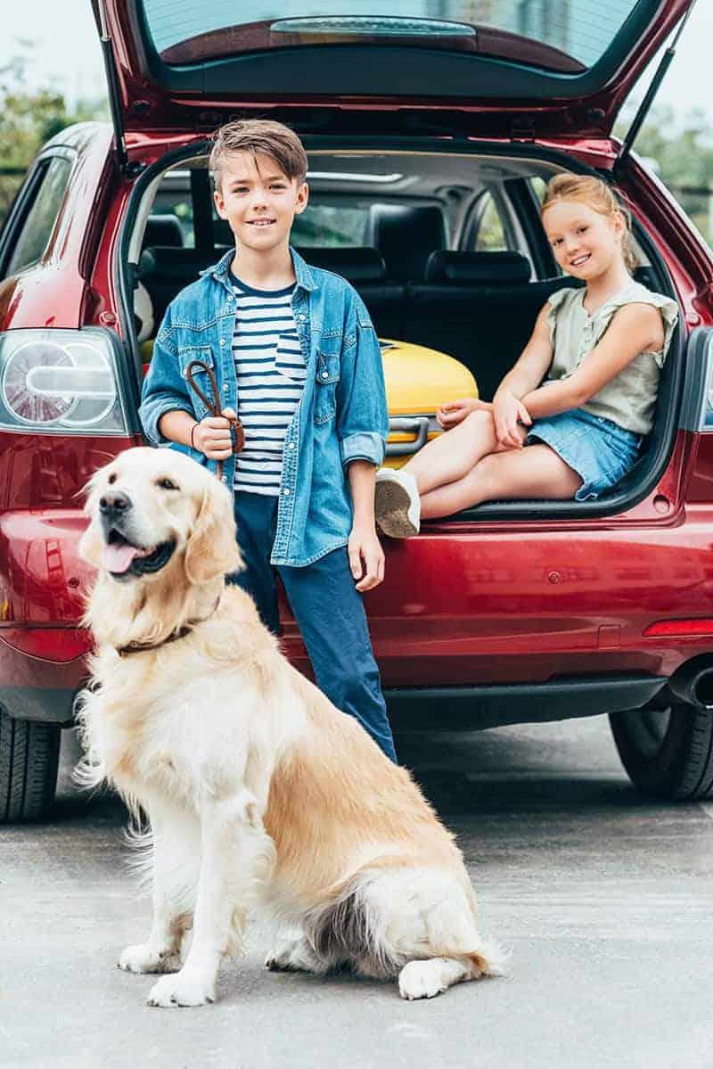 Samochód przyjazny dla psa