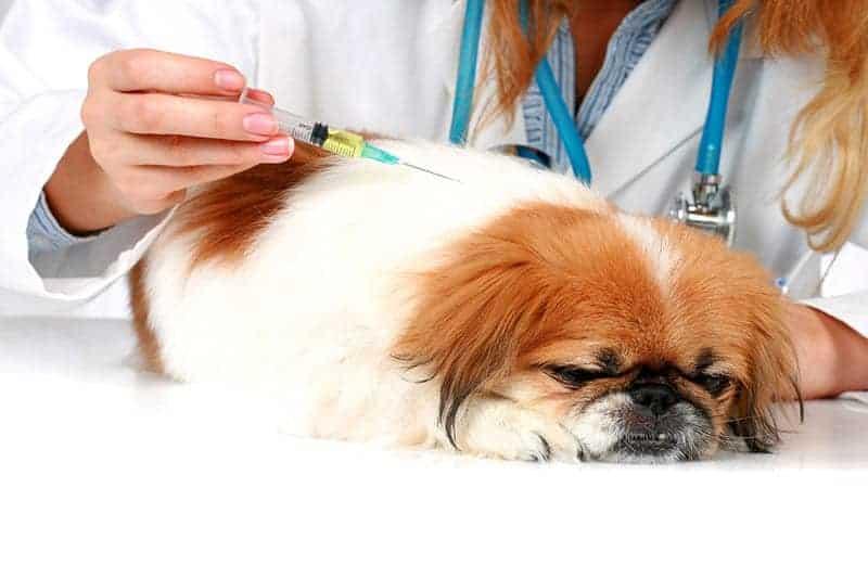 Szczepienie psa przed wyjazdem