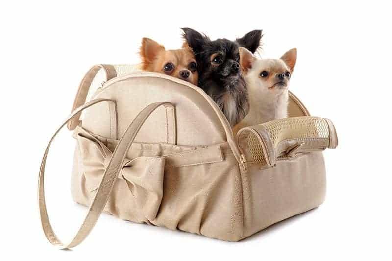Transporter dla psa