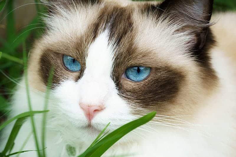 Jaka trawa jest najlepszadla kota?