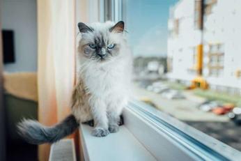 Siatka na okno dla kota