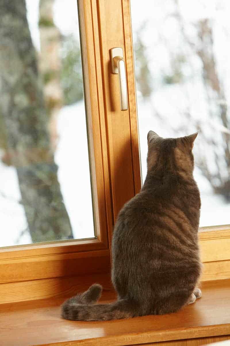 Jaką wybrać siatkę na okna dla kota?