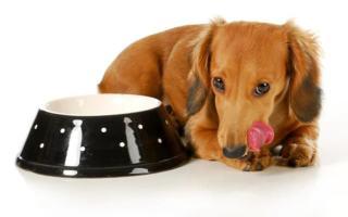Głodówka u psa i kota