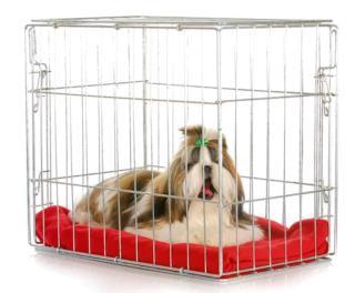 Klatka kennelowa dla psa