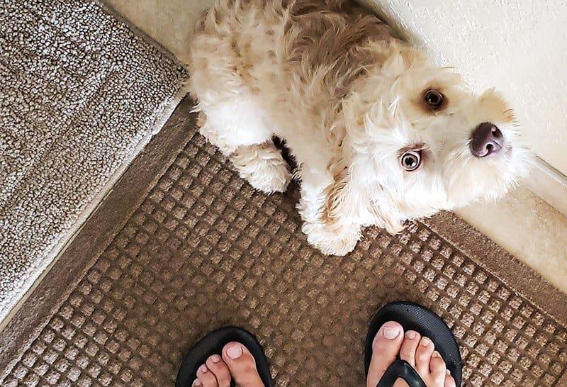Jak odczytać zachowanie psów?
