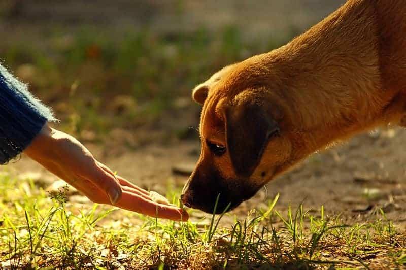 Karmienie interaktywne psa