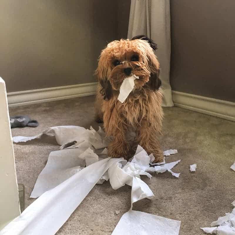 Zapobiegaj nudzie psa pod twoją nieobecność