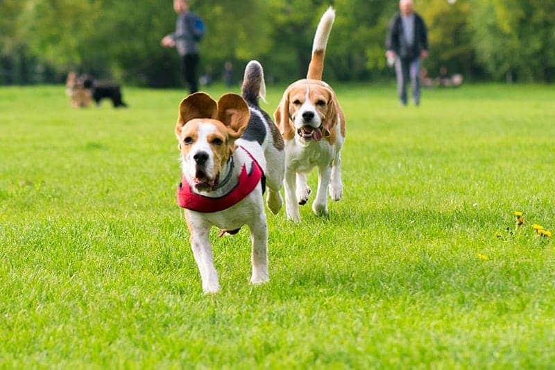 Spacer z psem - potrzeby fizjologiczne