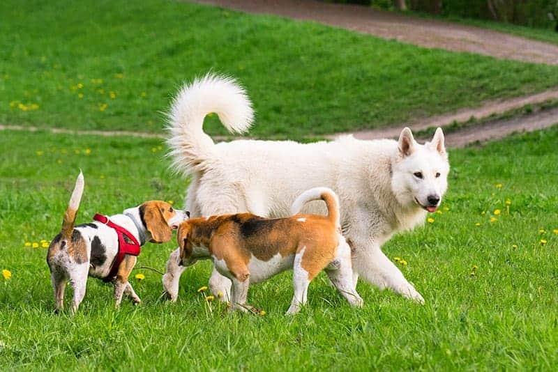Jakie potrzeby zaspokaja pies na spacerze?