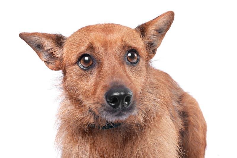 Jak zrelaksować psa, który się boi?