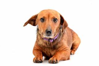 Jak postępować z lękliwym psem