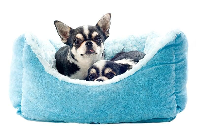 Jak pracować z lękliwym psem?