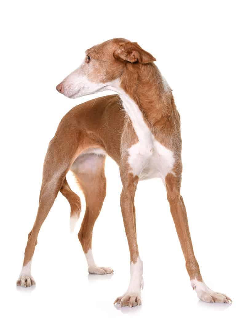 Pielęgnacja psa