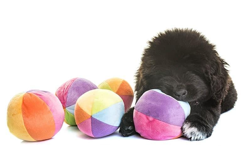 Domowe zabawki dla psa