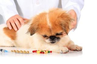 Leki uspokajające dla psa