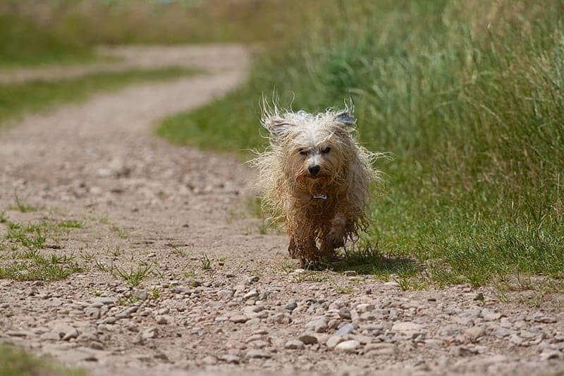 Pies ucieka
